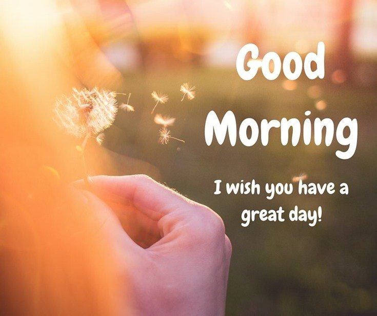 28 Amazing Good Morning Quotes and Wishes with Beautiful Images
