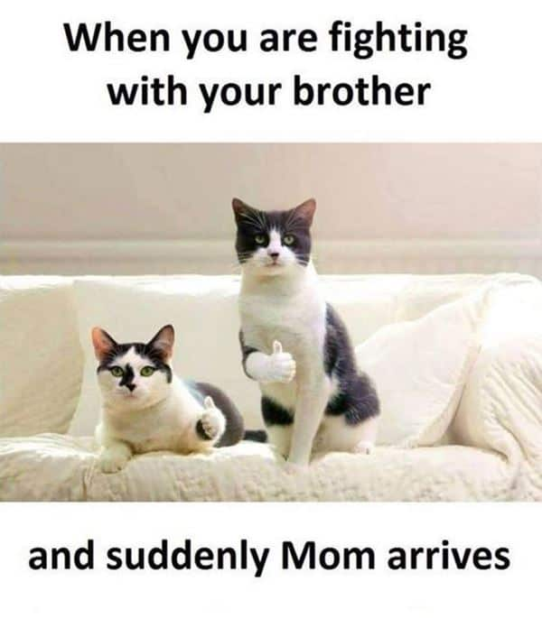 37 Funny Quotes And Sayings About Funny Memes 5