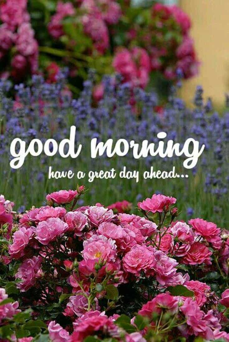 35 Amazing Good Morning Quotes and Wishes with Beautiful Images 9 #great day