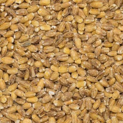 close up of Pearled Barley Organic