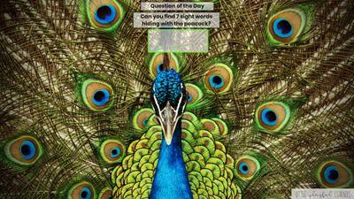 Seesaw: Sight word hunt - zoo animal theme