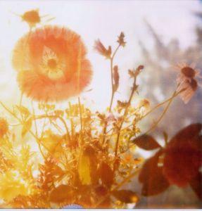 flowers by open project