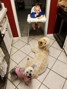 beggar dogs