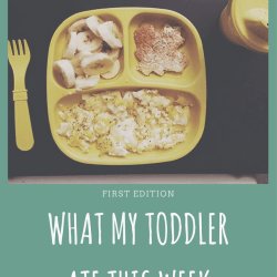 What Did My Toddler Eat This Week? 1st Edition