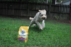 nature's recipe-grain free dog food-high quality pet food-walmart-goldendoodle