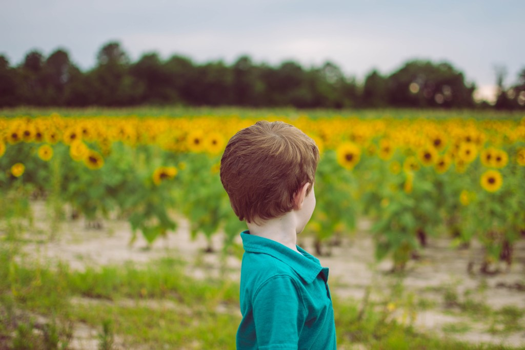 sunflower fields-columbia sc photographer