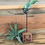 Planter Air Plant Holder Wood Block W Spring Little Prince To Go