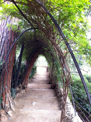 Love these hedge tunnels!