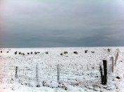 The sheep were covered in snow!