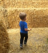 Exploring the hay maze