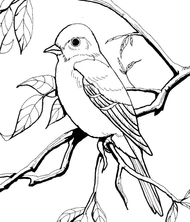 Freebie: Burgess Bird And Animal Book Images  Https://littleschoolhouseinthesuburbs.com/