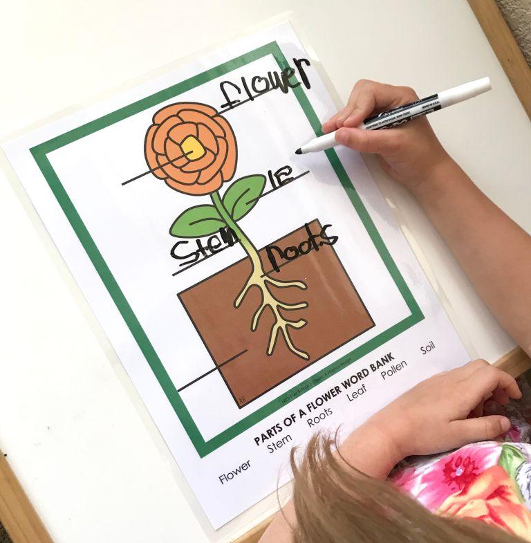 Little School of Smith's- Garden Week