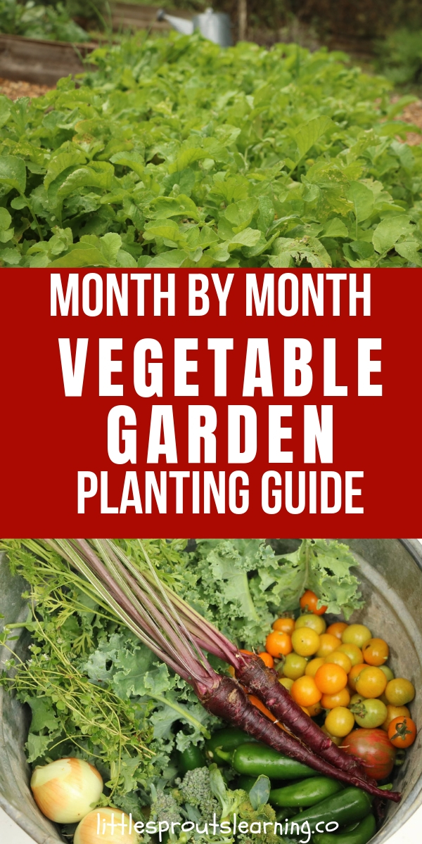Month By Month Vegetable Planting Guide For Gardeners