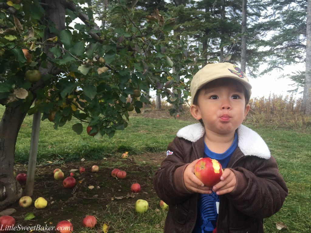 apple crisp-4