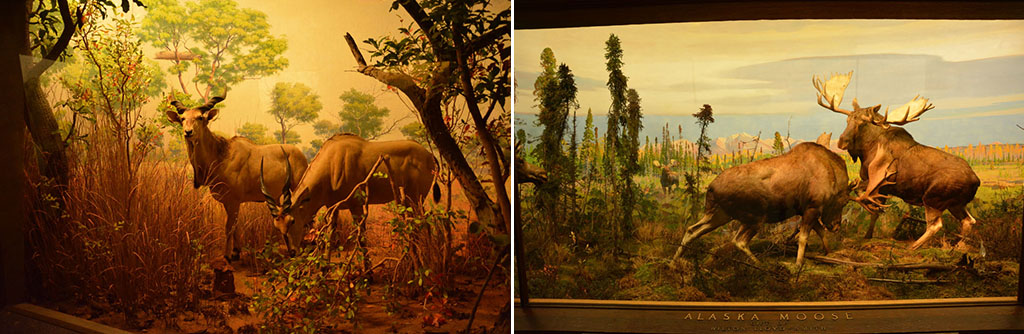 Voyage, mes incontournables pour visiter new-york, Musée d'Histoires Naturelles, American Museum of Natural History