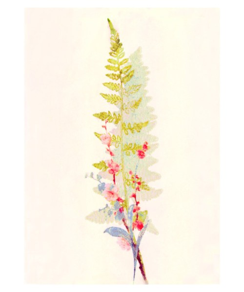 Spring Fern and Flowers by Hadley Hutton