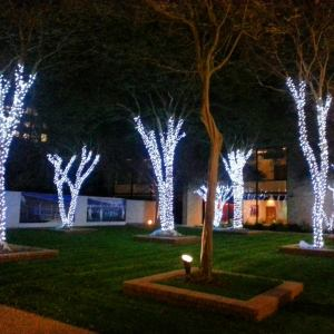 My med school decked out in lights