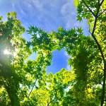 Little Tree Practice News