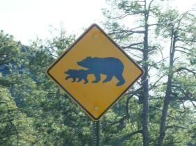 WATCH FOR BEARS