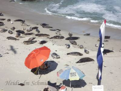 SEAL BEACH OPEN