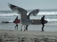 PHOTO BOMBING BIRD