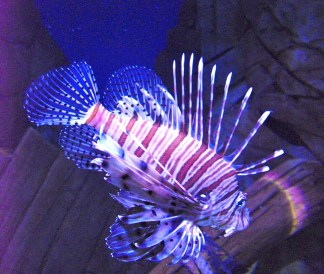 Spiky Fish