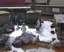 Penguin splash-pad
