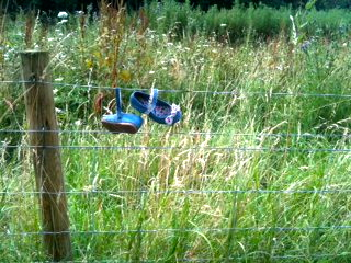 Blue Shoes - Aylestone Meadows