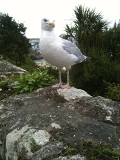 Friendly seagull