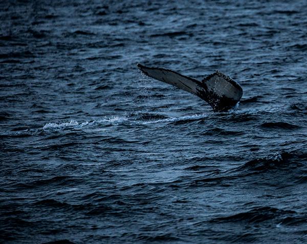 whale7