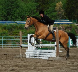 brown horse jumping (5)
