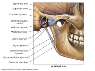 tmj-lateral-view