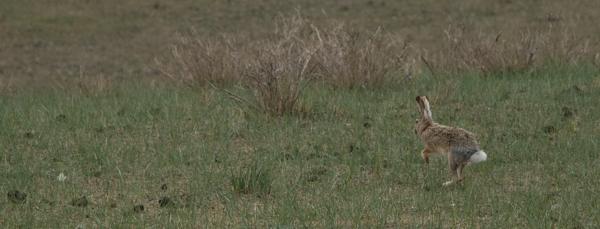 Run Rabbit, Bird Island