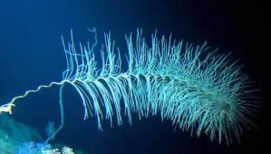 В дълбоководен вулкан са открити неизвестни форми на живот.