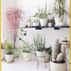 Decorate Living Room With Plants