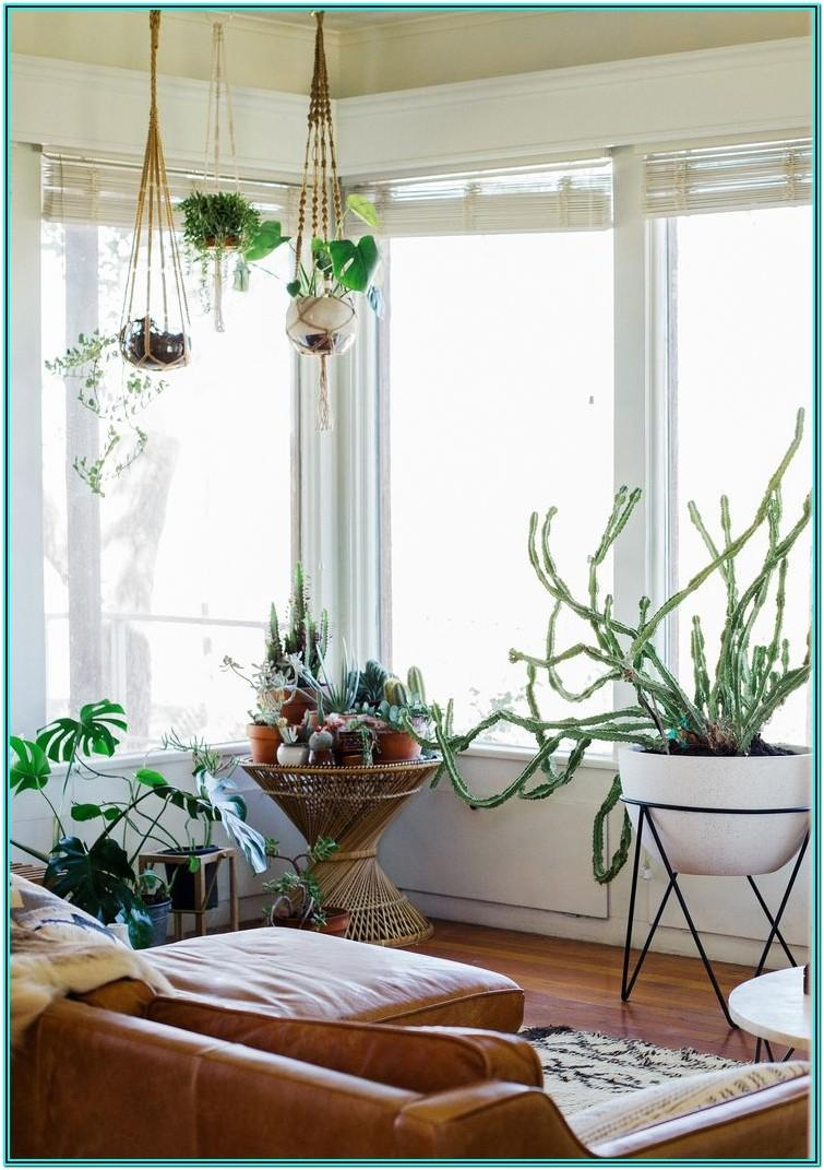 Living Room Decor Ideas With Indoor Plants