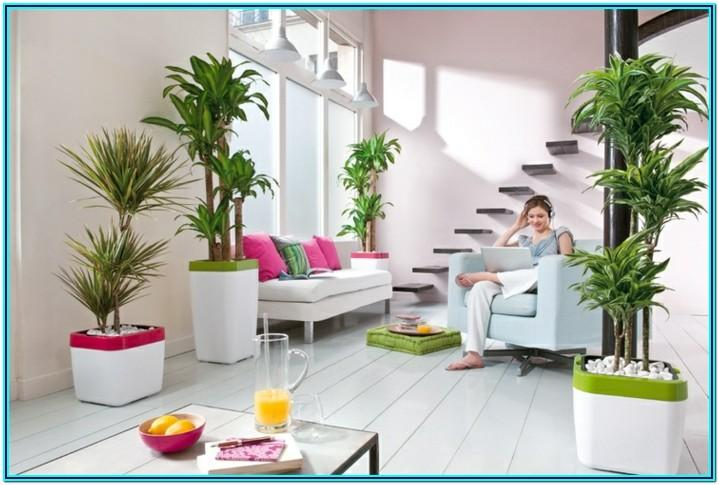 Living Room Home Decor Plants