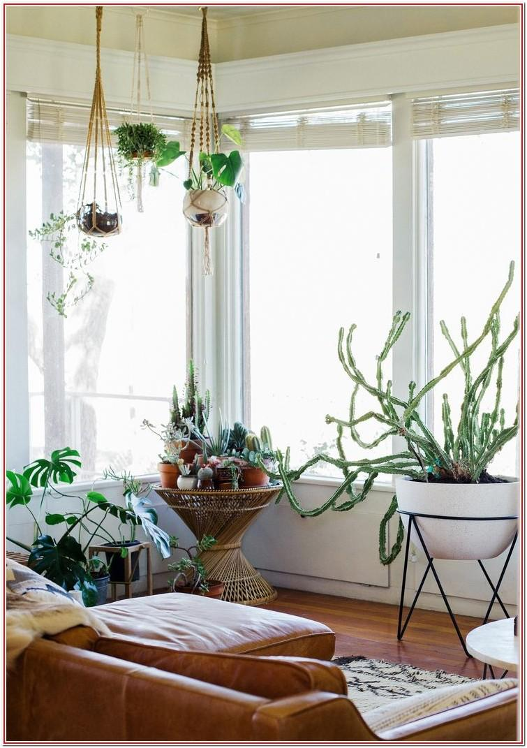 Living Room Indoor Plant Decor Ideas