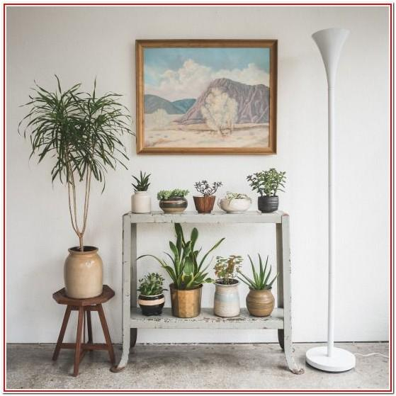 living room plant decoration ideas amazon