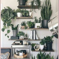 Living Room Shelf Decor For Plants
