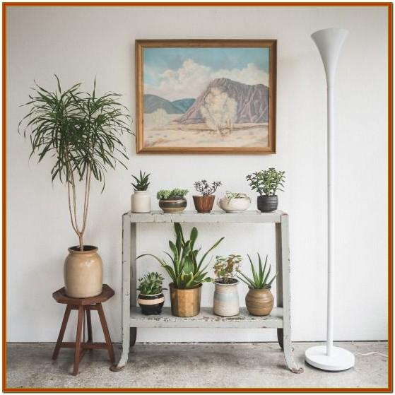Small Decorative Plants For Living Room