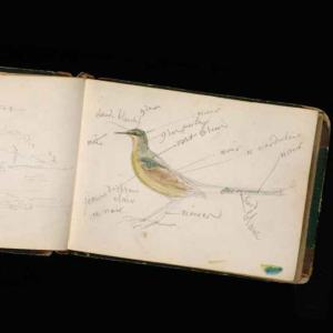 A book sits open against a black backdrop with the illustration of a bird with descriptive text