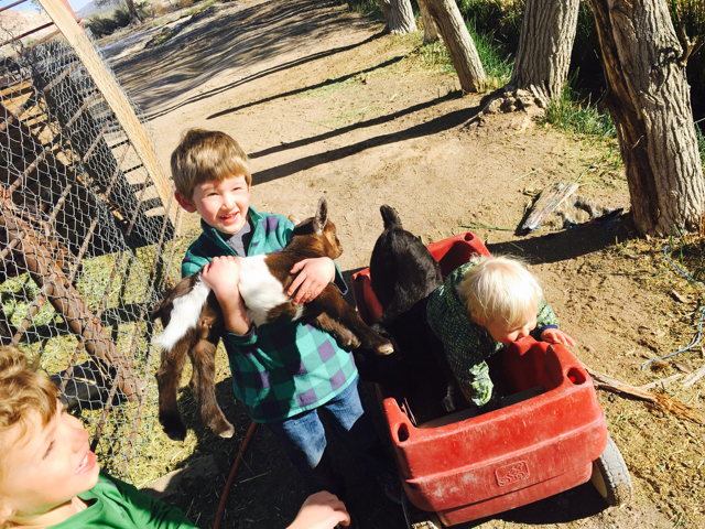Baby Goats at Bailey's Hot Springs