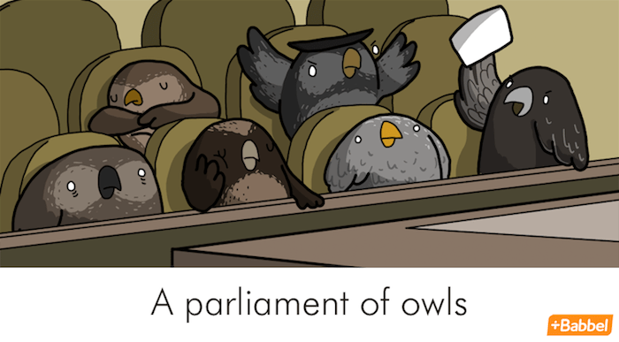 macello di corvi e altri divertenti nomi collettivi in inglese