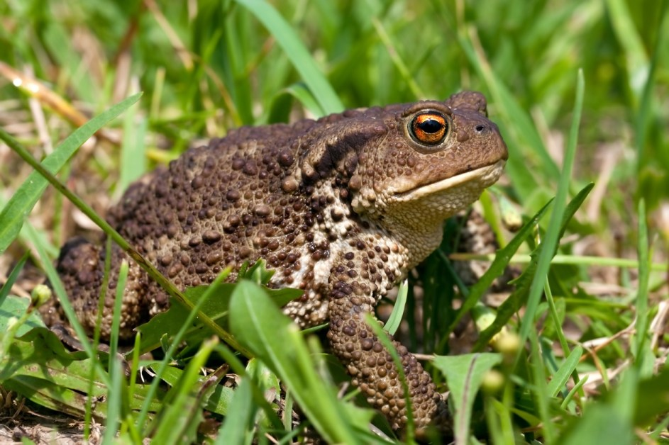 Animal Names In French — Toad