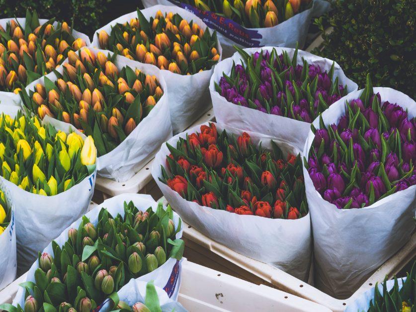 Amsterdam Tourism — Tulips