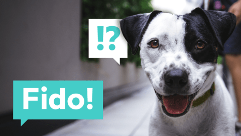 Popular Pet Names Around The World