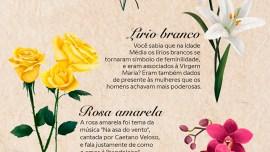 Floriografia, a linguagem das flores