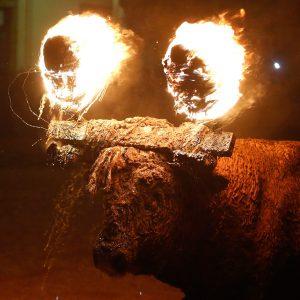 Bull at Toro Jubilo Festival