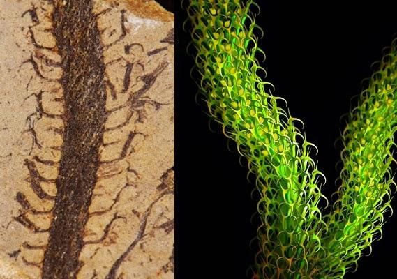 Lycopods, rendering by Jefferey Banca